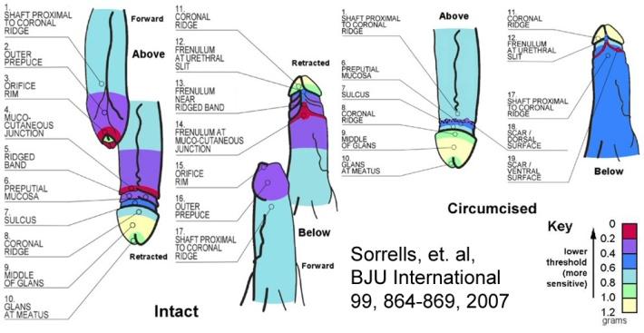 Sorrells-Chart-copy